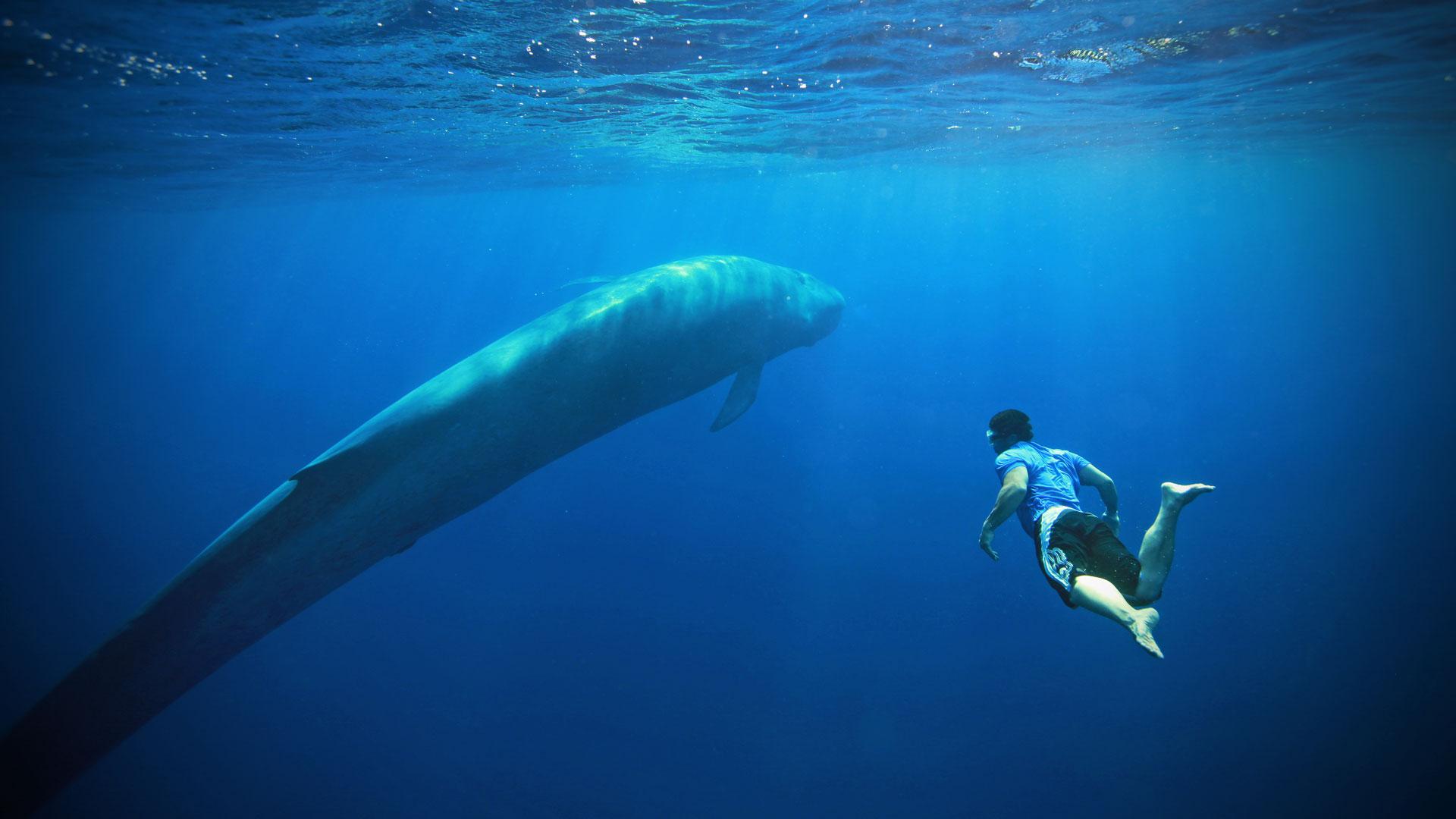 Come nasce la Blue whale o il green dolphin